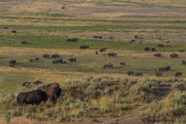 Jackson Hole EcoTour Wildlife Adventures | Secrets to