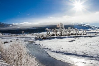 Unforgettable Winter Wildlife Safari in Yellowstone and Grand Teton
