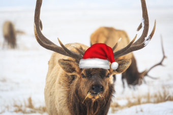 Jackson Hole Winter Wildlife, Cross Country Skiing, and Snowshoe Holiday Gift Guide