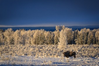 Finding the Wild of Winter in Grand Teton and Yellowstone National Parks with Jackson Hole Ecotour Adventures