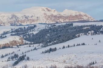 Jackson Hole Wildlife Log Late January 2017