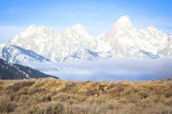 Jackson Hole Wildlife Tour Log Late December 2017