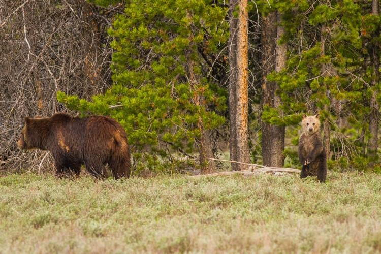 find national parks wildlife