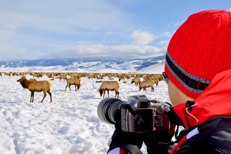 jackson hole ecotour wildlife adventures best winter activities in