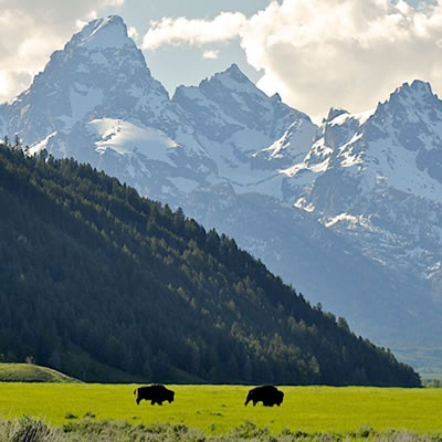 Grand Teton Wildlife Tours from Jackson Hole